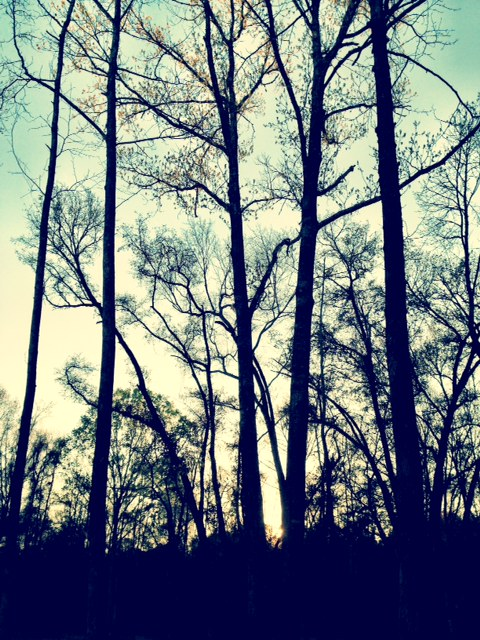 The Bare Trees of Winter in Charleston SC