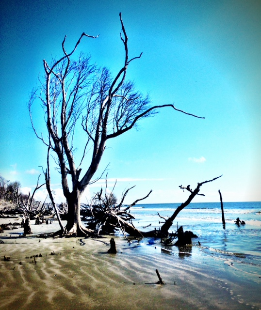 Capers Island Beach
