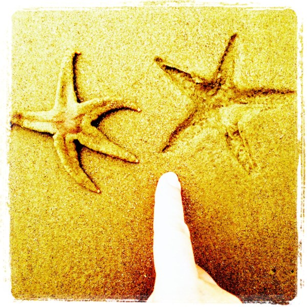 Summer & Starfish